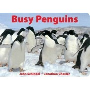 Busy Penguins by John Schindel