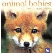 Animal Babies in Towns and Cities by Kingfisher Books