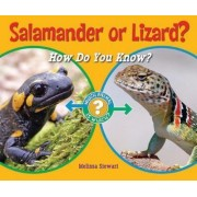Salamander or Lizard?: How Do You Know? by Melissa Stewart