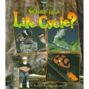 What is a Life Cycle? by Jacqueline Langille