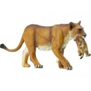 Lion - Lionne Avec Bébé
