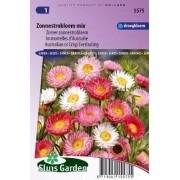 Helipterum roseum - Zonnestrobloem mix zaad bloemzaden