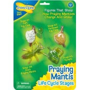 Insect Lore Praying Mantis Life Cycle Stages by Insect Lore