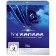 blu::elements project - Forsenses (0886975485093) (1 BLU-RAY)