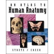An Atlas to Human Anatomy by Dennis Strete