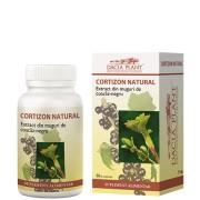 Cortizon natural - menţinerea sănătăţii tractului respirator si articulatiilor