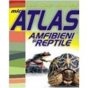 Mic atlas amfibieni si reptile - Dumitru Murariu Aurora Mihail