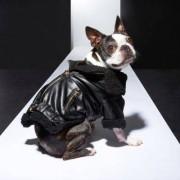 River Island Womens RI Dog Black biker jacket