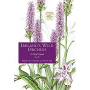 Ireland's Wild Orchids by Brendan Sayers