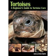 Tortoises Beginners GT Tortoise Care by Andrew Highfield