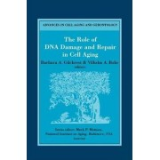 The Role of DNA Damage and Repair in Cell Aging by Barbara A. Gilchrest