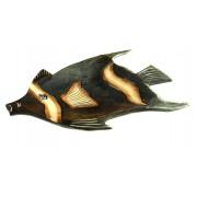 Orientalna taca ryba mała ( Indonezja )
