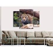 Леопард в джунглата