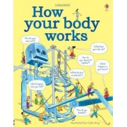 How Your Body Works by Judy Hindley