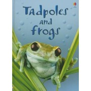 Tadpoles and Frogs by Anna Milbourne