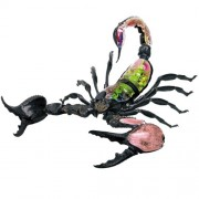 Deadly 60 3D Anatomical Model – Emperor Scorpion
