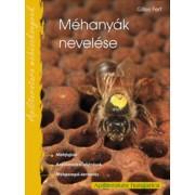 Méhanyák nevelése