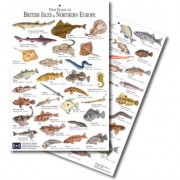 Fish Guide to the British Isles and Northern Europe