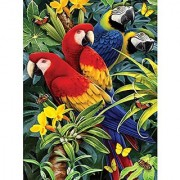 Royal Brush 8.75 by 11.75-Inch Junior Paint by Number Kit Small Majestic Macaws