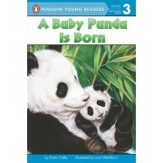 A Baby Panda Is Born by Kristin Ostby