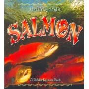 The Life Cycle of a Salmon by Bobbie Kalman