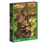 Clementoni - Puzzle de 1000 piezas, National Geographic, diseño Chimpancés (393015)