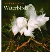 Waterbirds by Theodore Cross