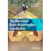 The Marmoset Brain in Stereotaxic Coordinates by Xavier Palazzi