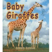 Baby Giraffes by Bobbie Kalman