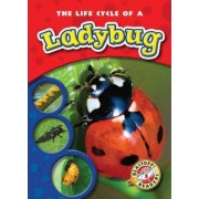 The Life Cycle of a Ladybug by Colleen Sexton