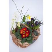 Cos din rachita cu flori de primavara in ghiveci