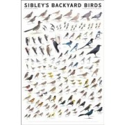 Sibley's Backyard Birds by David Allen Sibley