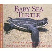 Baby Sea Turtle by Audrey Lang