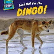 Look Out for the Dingo! by Amy Austen