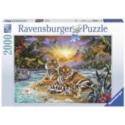 Puzzle Tigri 2000 Piese
