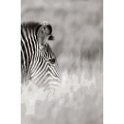 Alive! Zebra Stripes - Black and White - Photo Art Notebooks (6 X 9 Series)