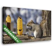 Kukoricát rágcsáló mókus (40x25 cm, Vászonkép )