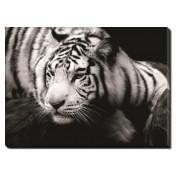 Tablou Canvas Tigru Siberian