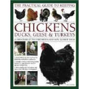 The Practical Guide to Keeping Chickens, Ducks, Geese & Turkeys by Fred Hams