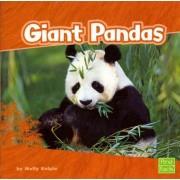 Giant Pandas by Molly Kolpin