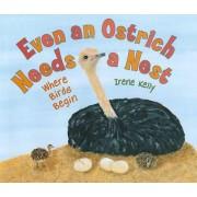 Even an Ostrich Needs a Nest by Irene Kelly