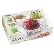 Coffret découverte germination Germline