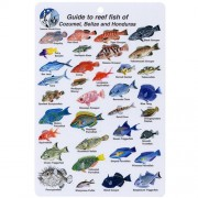 Guide to Reef Fish of Cozumel, Belize, and Honduras