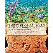 The Rise of Animals by Mikhail A. Fedonkin
