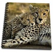3dRose db_71059_1 Cheetah with Cub in the Masai Mara Gr Kenya-AF21 JMC0167 Joe and Mary Ann McDonald Drawing Book 8 by 8