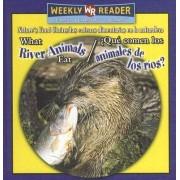 What River Animals Eat/Que Comen Los Animales de Los Rios? by Joanne Mattern