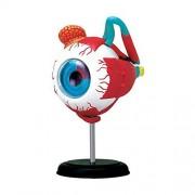 Biolab India 4D Vision Human Anatomy Eyeball Anatomy Model