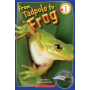 From Tadpole to Frog by Kathleen Weidner Zoehfeld