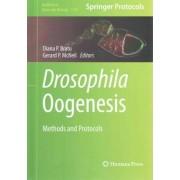 Drosophila Oogenesis 2015 by Diana P. Bratu
