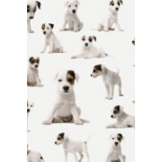 Parson Russell Terrie Puppies (for the Love of Dogs): Blank 150 Page Lined Journal for Your Thoughts, Ideas, and Inspiration